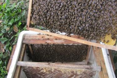 Phong Nha - Kẻ Bàng: Mô hình nuôi ong mật hữu cơ dưới tán rừng tự nhiên